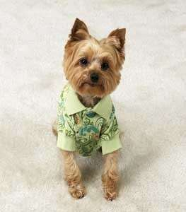East Side Paisley Puppy Dog Polo Shirt XS Green Yorkie