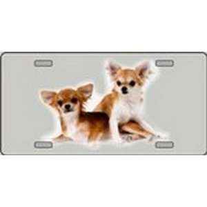 Chihuahua Dog Pet Novelty License Plates Full Color Photography