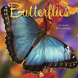 2011 Animal Calendars Butterlies   16 Month   30x30cm